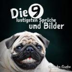 Lachender Hund - Die 9 lustigsten Sprüche und Bilder