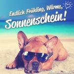 Frühling, Sommer Sonne Spruch mit Hund