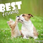 Hund und Katze beste Freunde Spruch