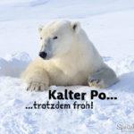 Lustiger Eisbär Spruch mit Bild