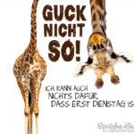 Lustiger Spruch mit Giraffe zum Dienstag Morgen