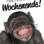 Lustiger Spruch zum Wochenende mit Affen