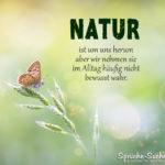 Natur Spruch zum Nachdenken mit Schmetterling