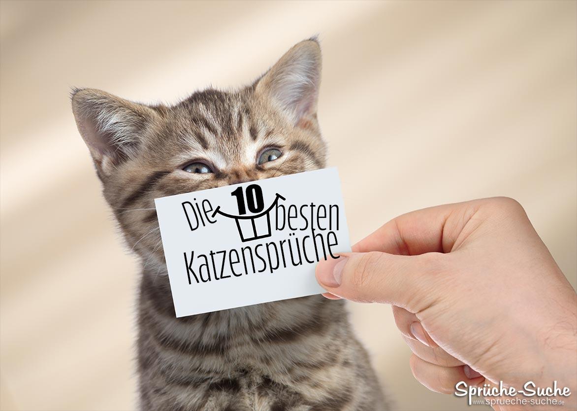 Die 10 besten Katzensprüche
