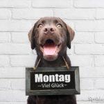 Montag Spruch mit Hund - Viel Glück