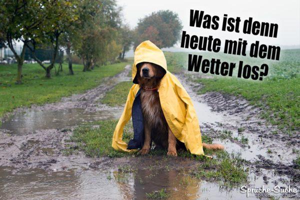 Regen - schlechtes Wetter Spruch mit Hund