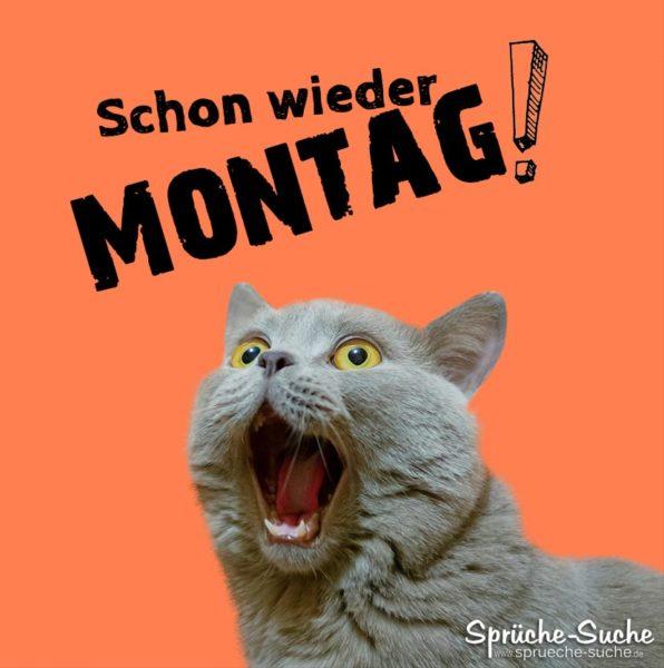 Schon wieder Montag Spruch mit erschrockener Katze