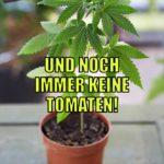 Lustiger Cannabis Spruch