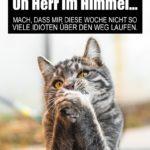 Lustiger Spruch mit Katze zum Wochenstart und Montag